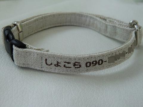 CIMG3802-1.JPG