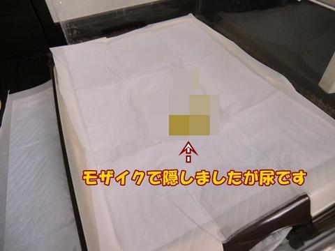 CIMG4180-1.JPG