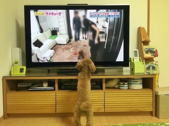 ジョン君テレビ-1.jpg