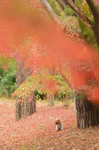 昭和記念公園みゆき_210106_1.jpg